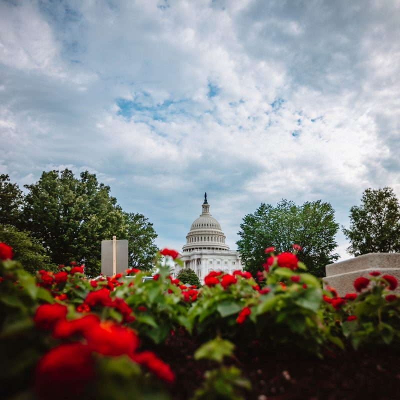 United States Capitol Summer Flowers