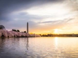 Washington Monument Cherry Blossom Festival Sunrise
