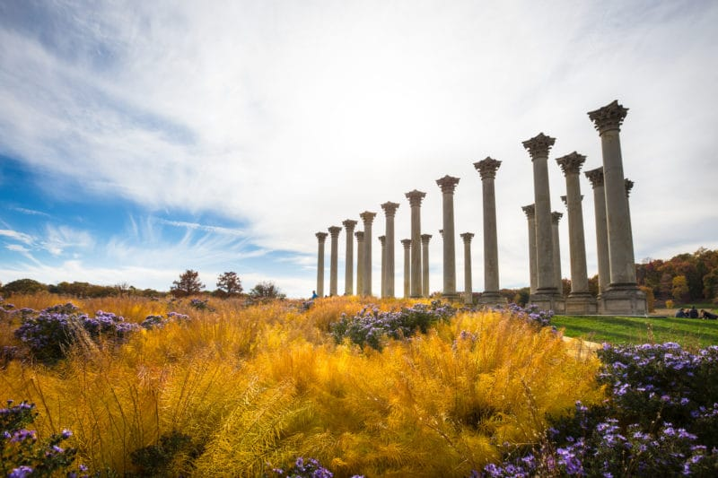 Capitol Columns at the National Arboretum
