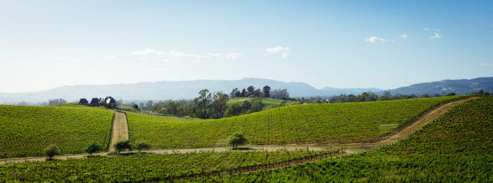 Napa Valley Fields