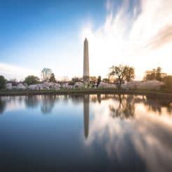 Cherry Blossoms Sunrise Monument