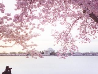 Cherry Blossoms Sunrise Photographer
