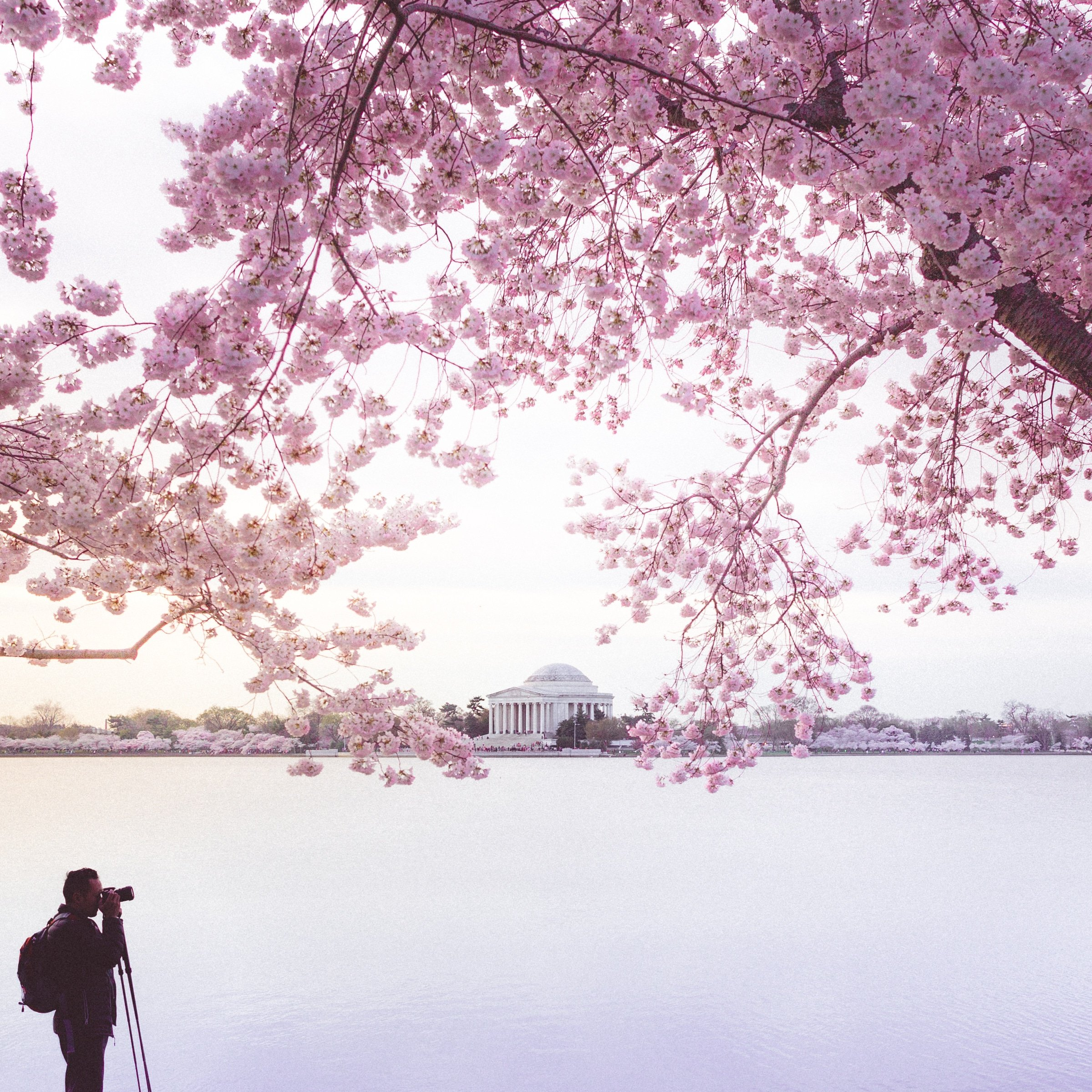 cherry blossoms 2015 sunrise photographer
