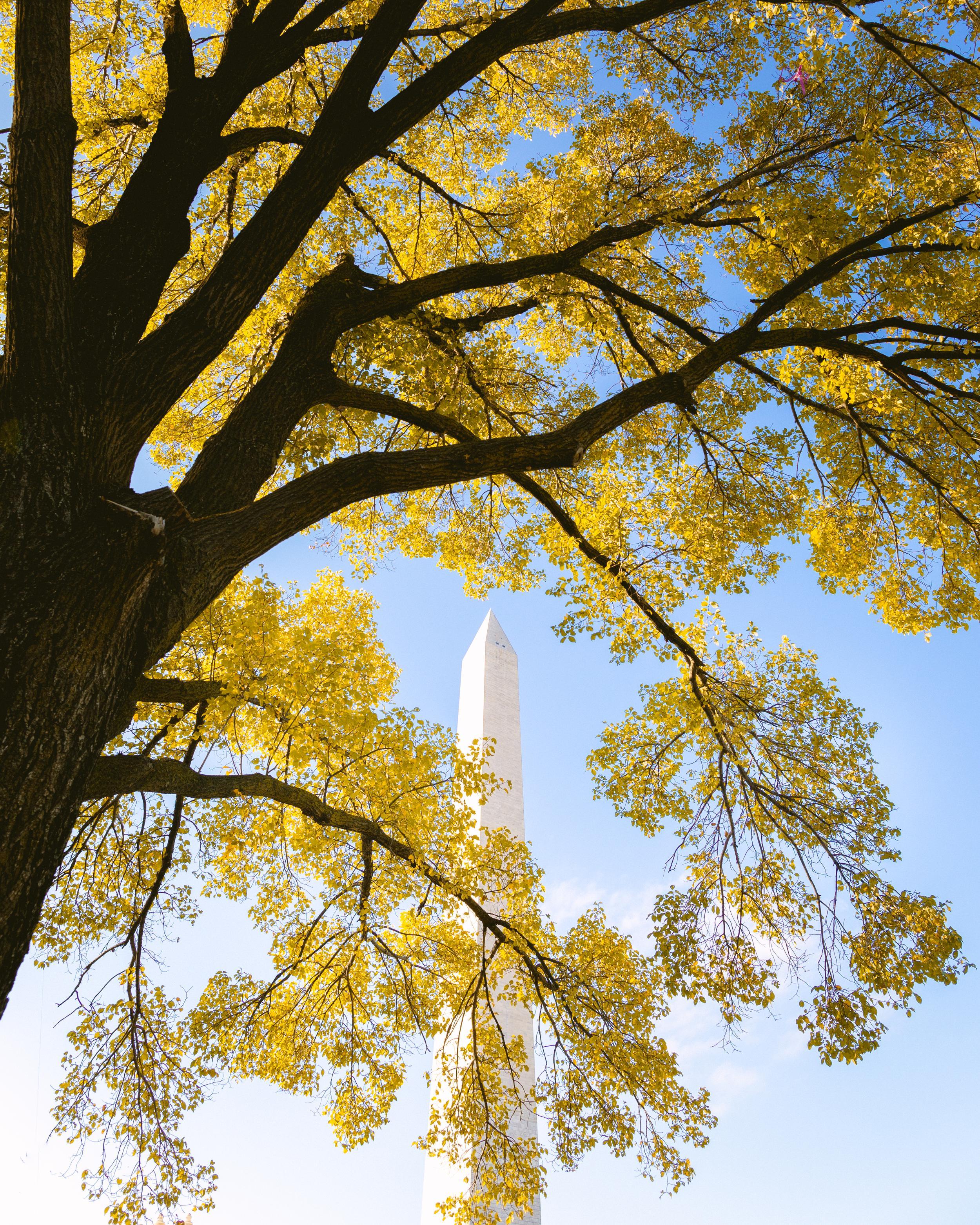 Washington Monument Fall Colors