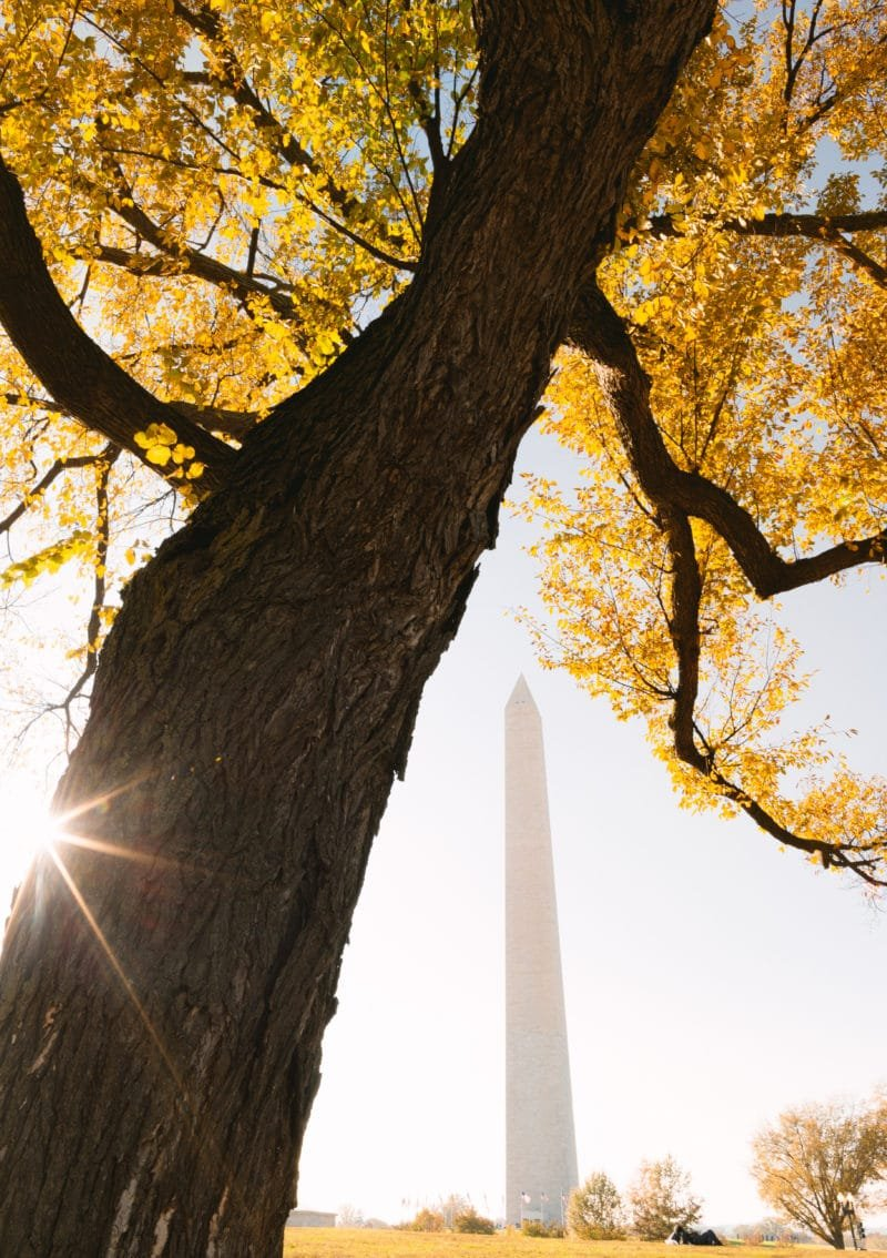 Washington Monument Surrounded by Autumn Trees