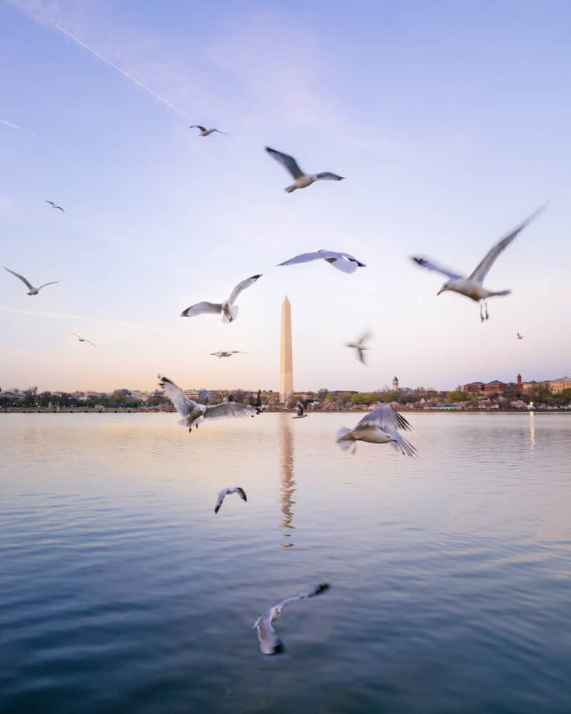 View of the Washington Monument from the Tidal Basin