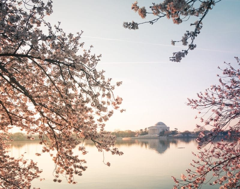 Jefferson Memorial Sunrise at the Cherry Blossoms on the Tidal Basin