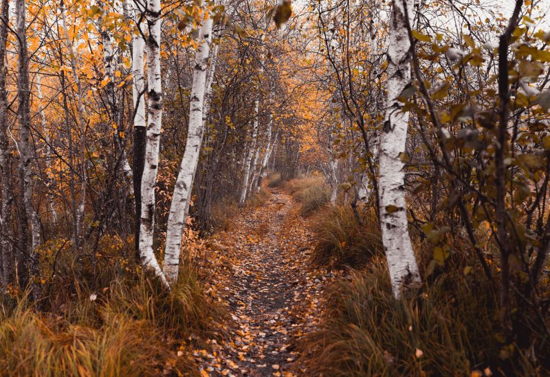 acadia-national-park-fall-trail