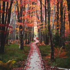 Acadia National Park Jessup Trail