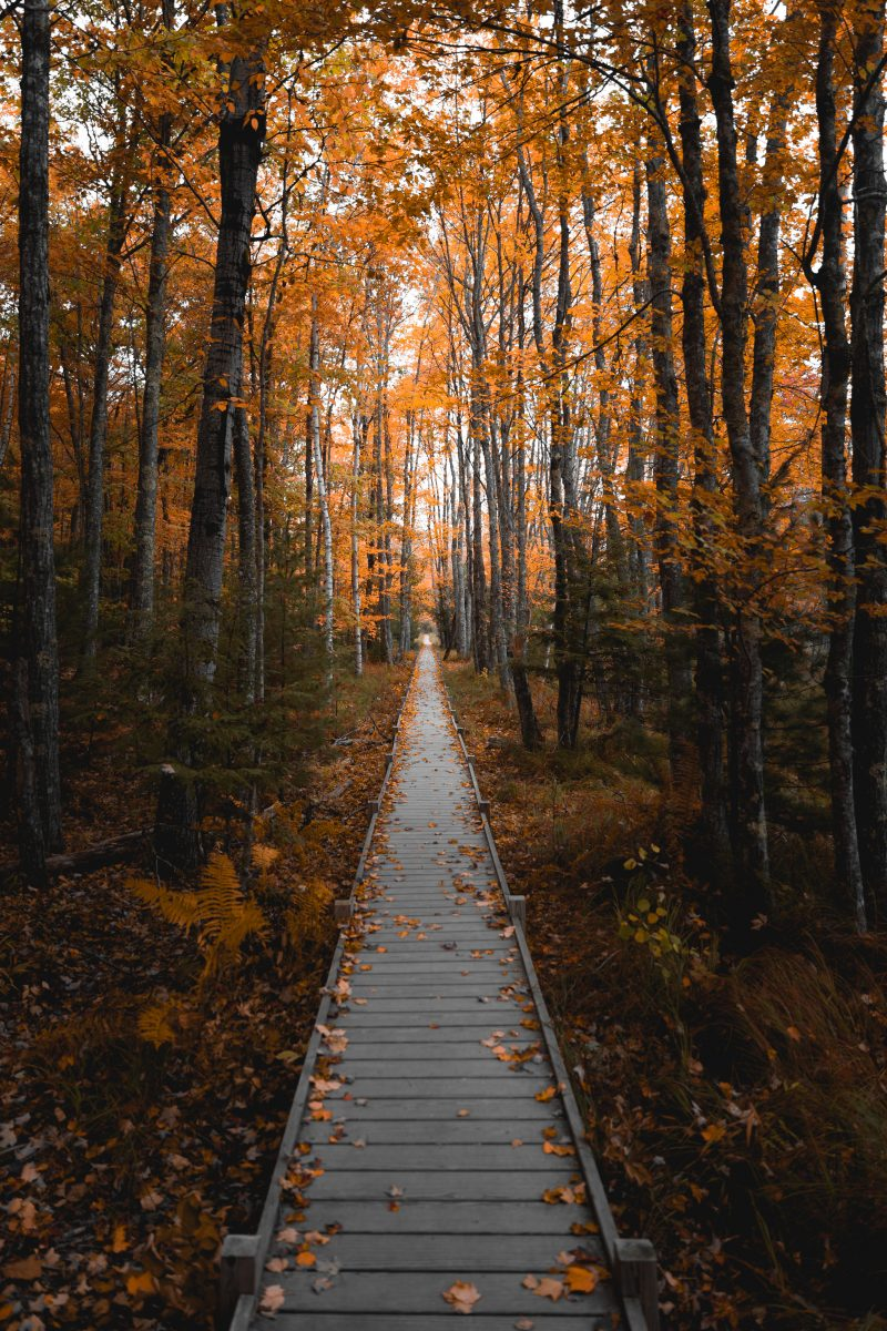 acadia-national-park-jessup-trail-fall
