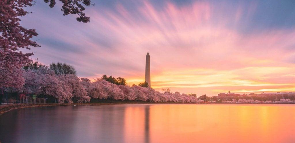 Cherry Blossom 2019 Cover Sunrise