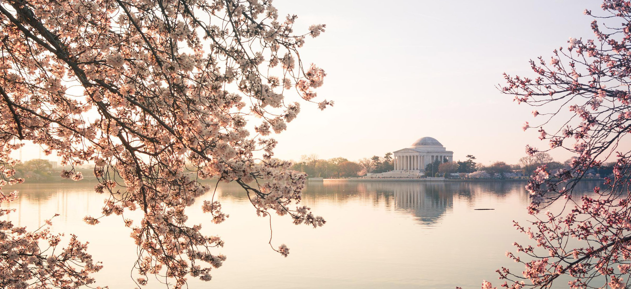 Cherry Blossoms Dc 2019 Peak Bloom Prediction And Travel Guide