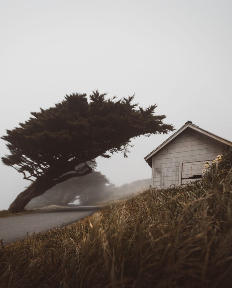 Foggy Cypress Point Reyes