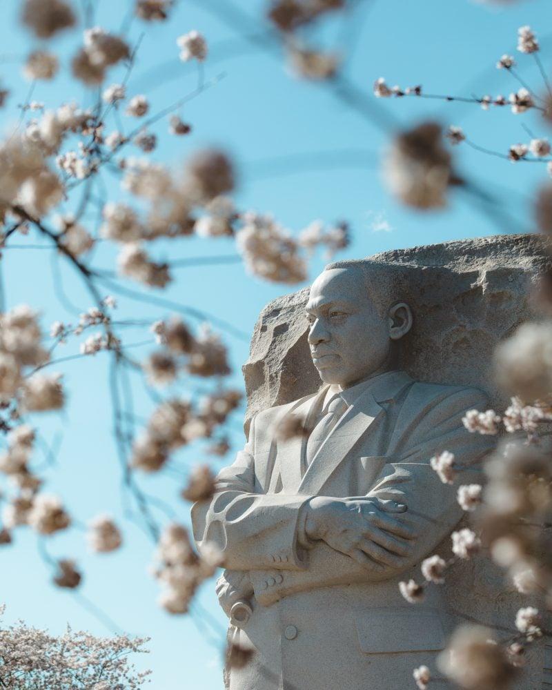 Mlk Memorial Cherry Blossoms 2018