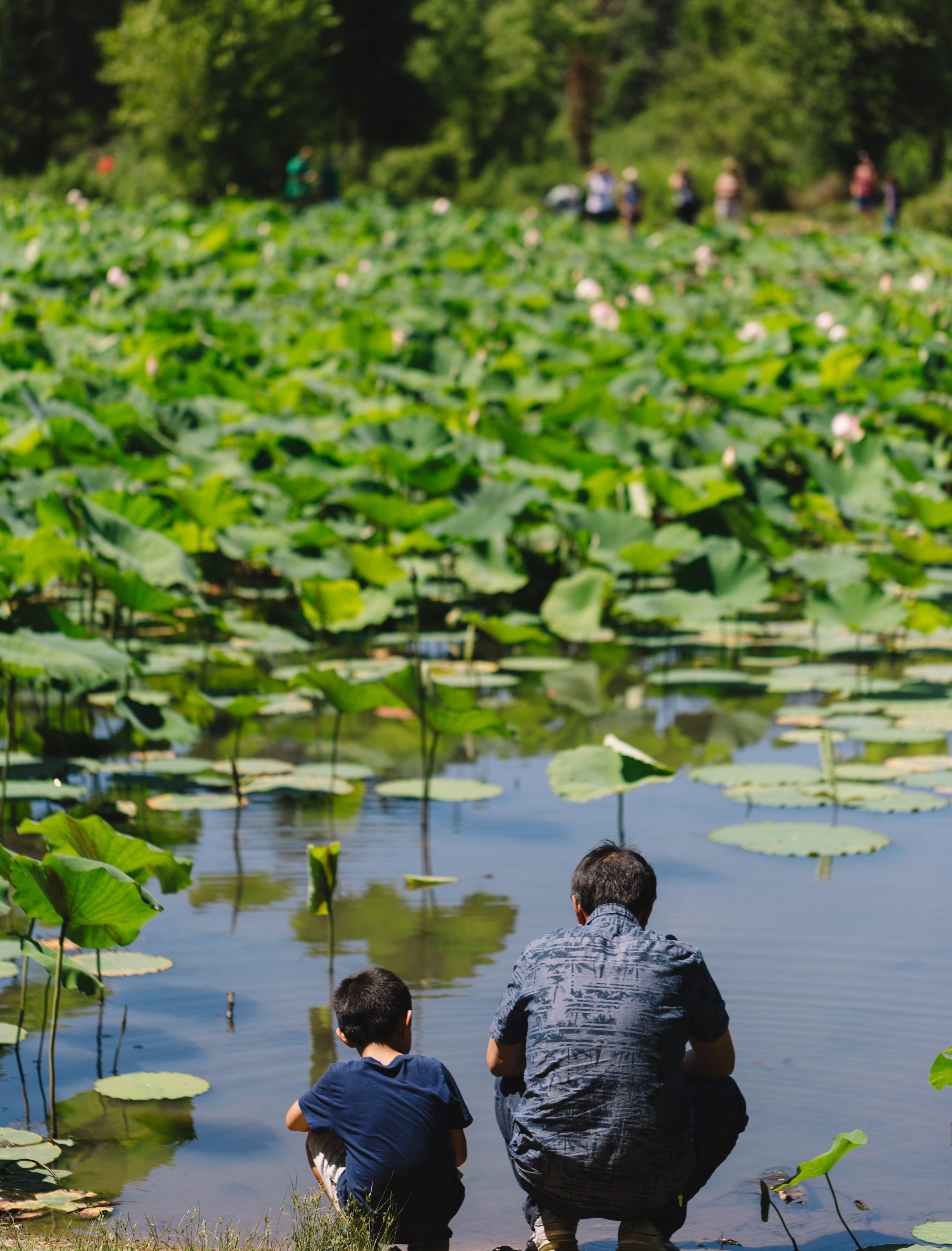 Kenilworth Aquatic Gardens Family Enjoying Flowers