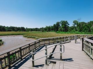 Kenilworth Aquatic Gardens Obeservation Deck