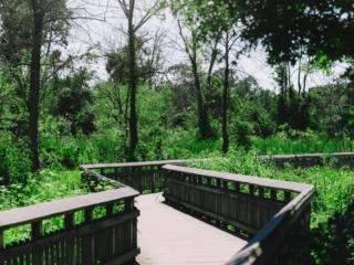 Kenilworth Aquatic Gardens Walkway