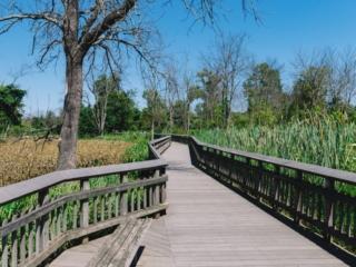 Kenilworth Aquatic Gardens Wooden Walkway