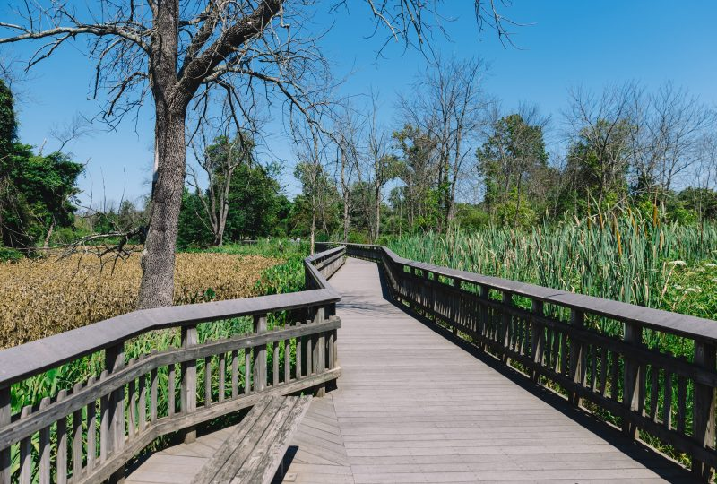 Kenilworth Aquatic Gardens Wooden Walkway