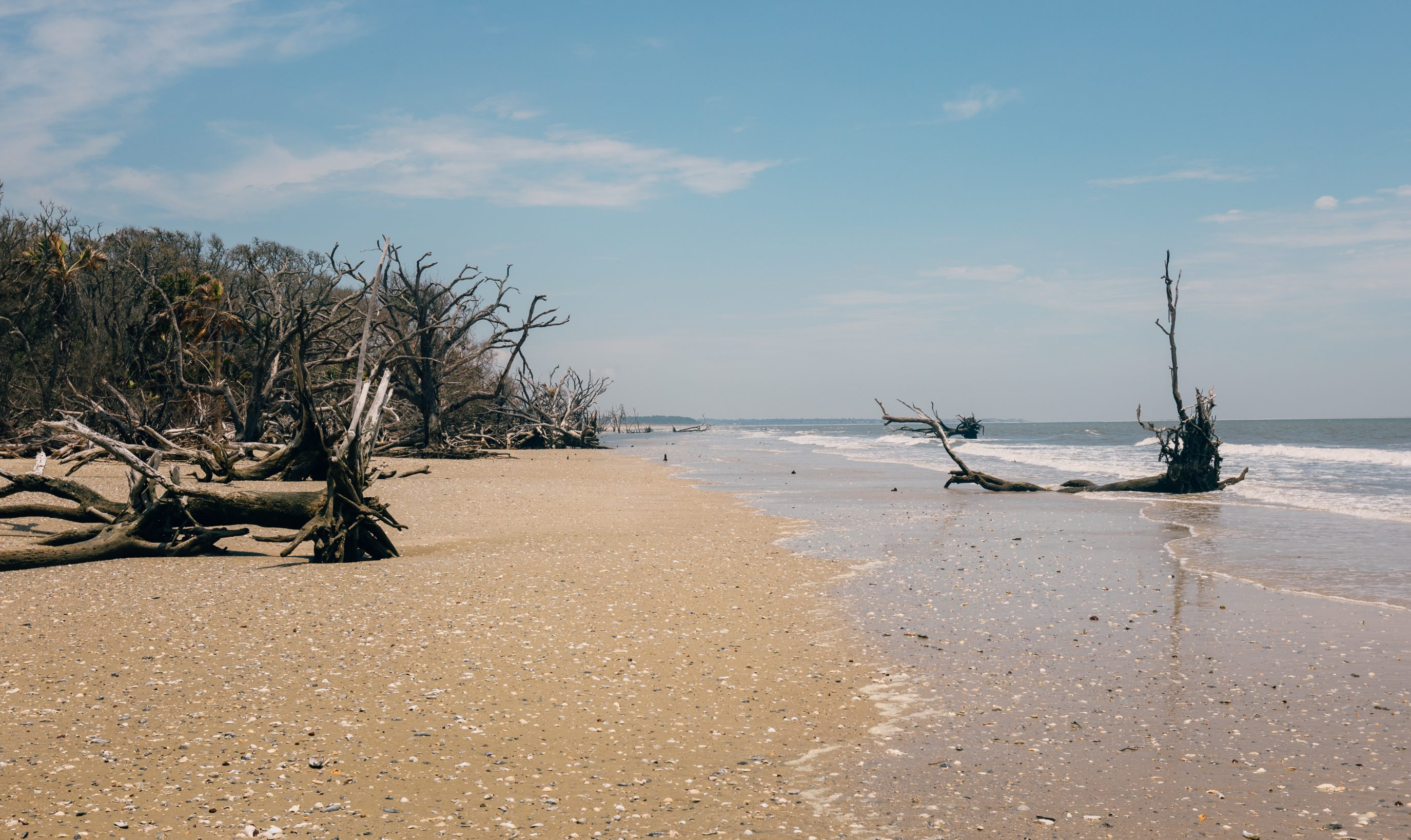 Beach At Botany Bay Sc