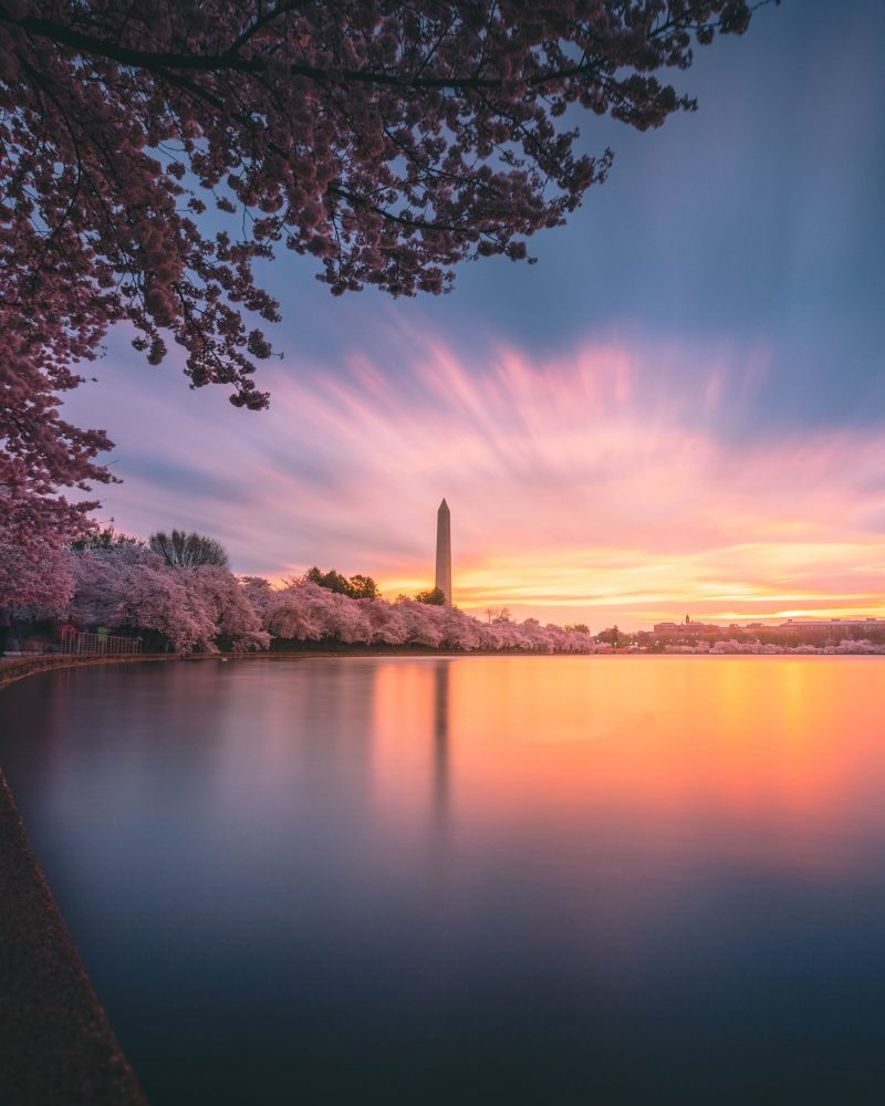 Tidal Basin Sunrise Cherry Blossoms