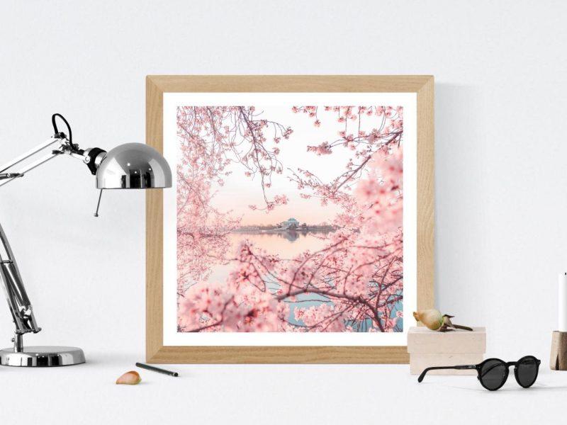 Dc Cherry Blossom Print