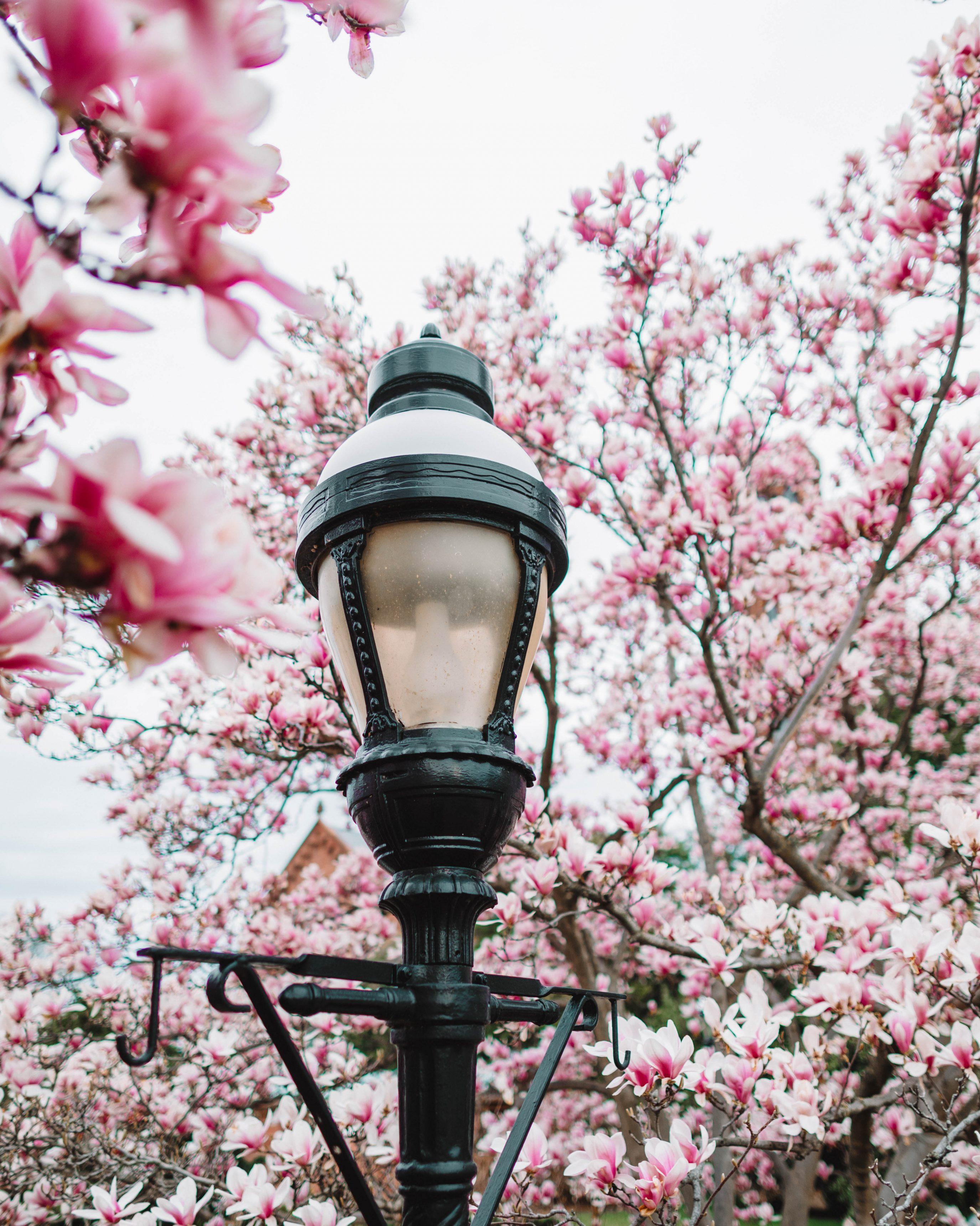 Enid Haupt Garden Dc Smithsonian 4