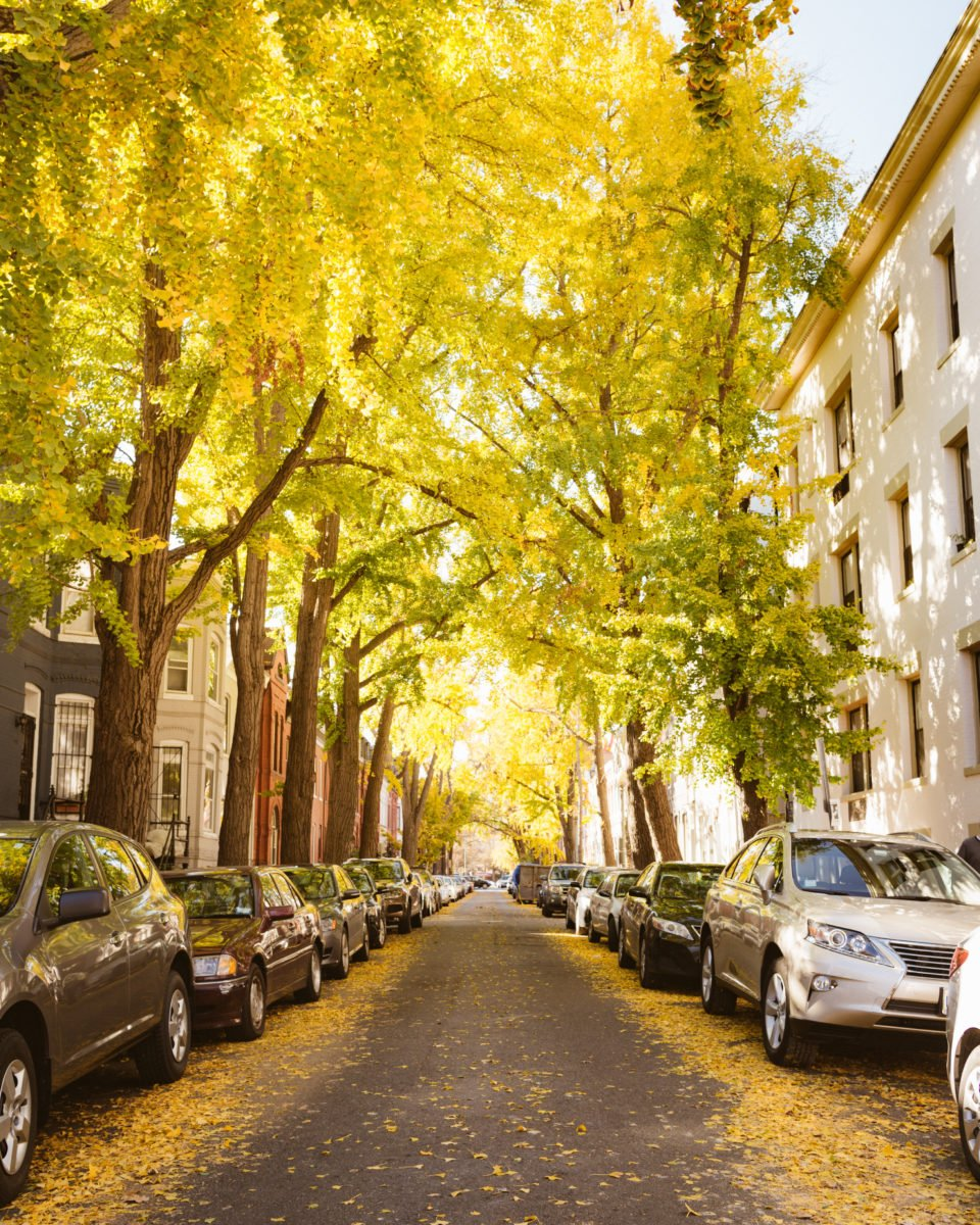 Fall colors at Swann Street in DC